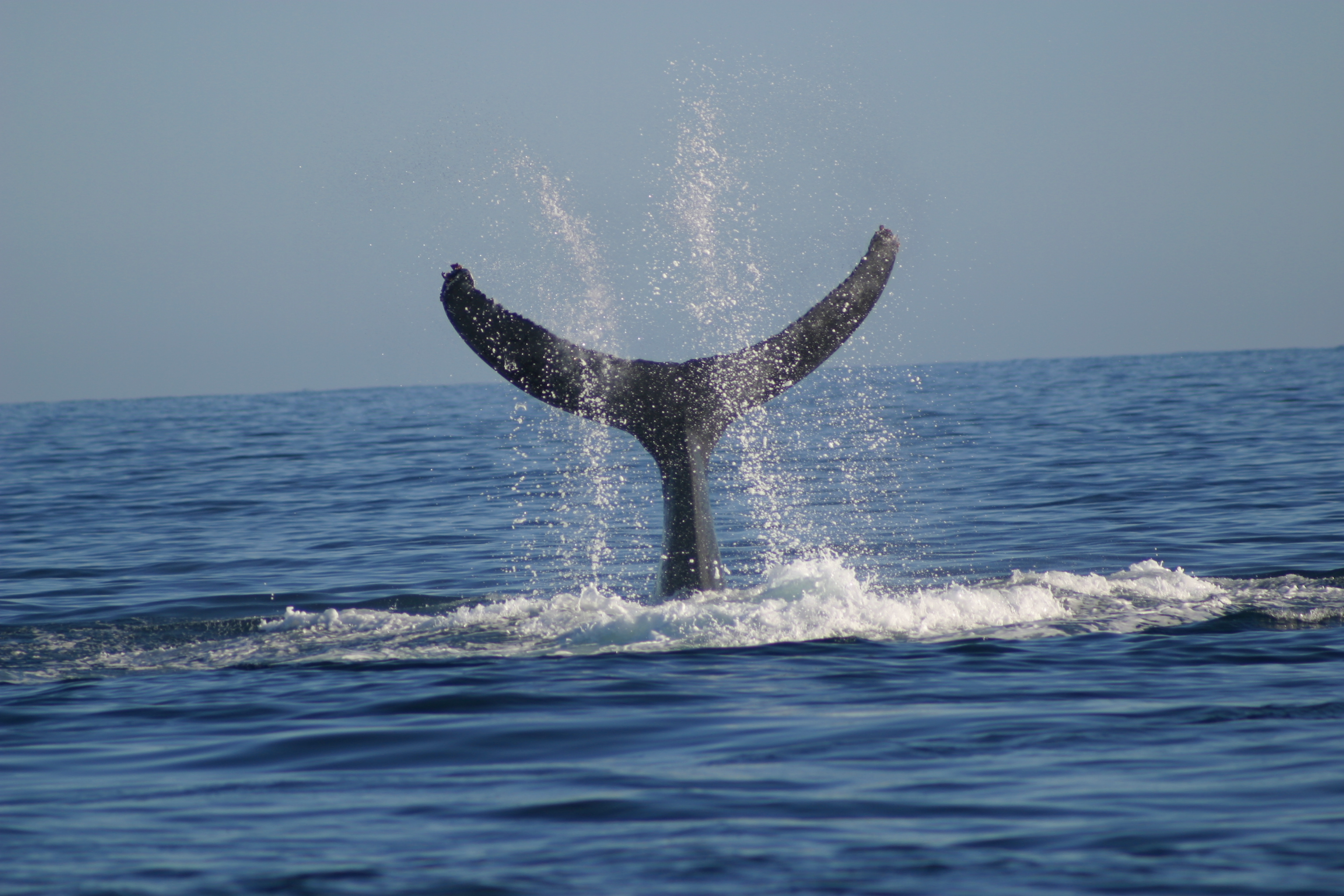 Three humpback whales dead after Madagascar fuel spill 1