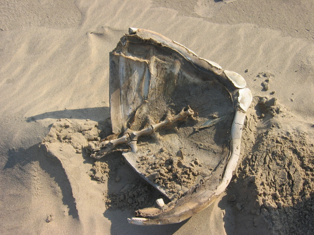 Fossils in Angola… become an archaeologist and discover your own treasures