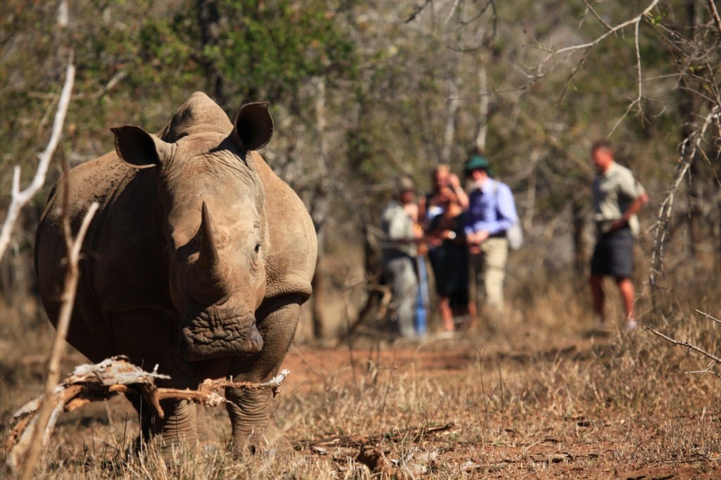 Adventures in Swaziland – The Rhino Encounter