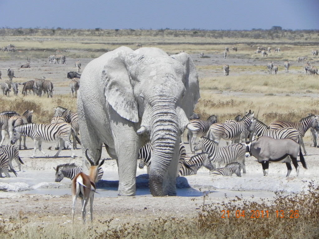 Etosha is hard to forget…