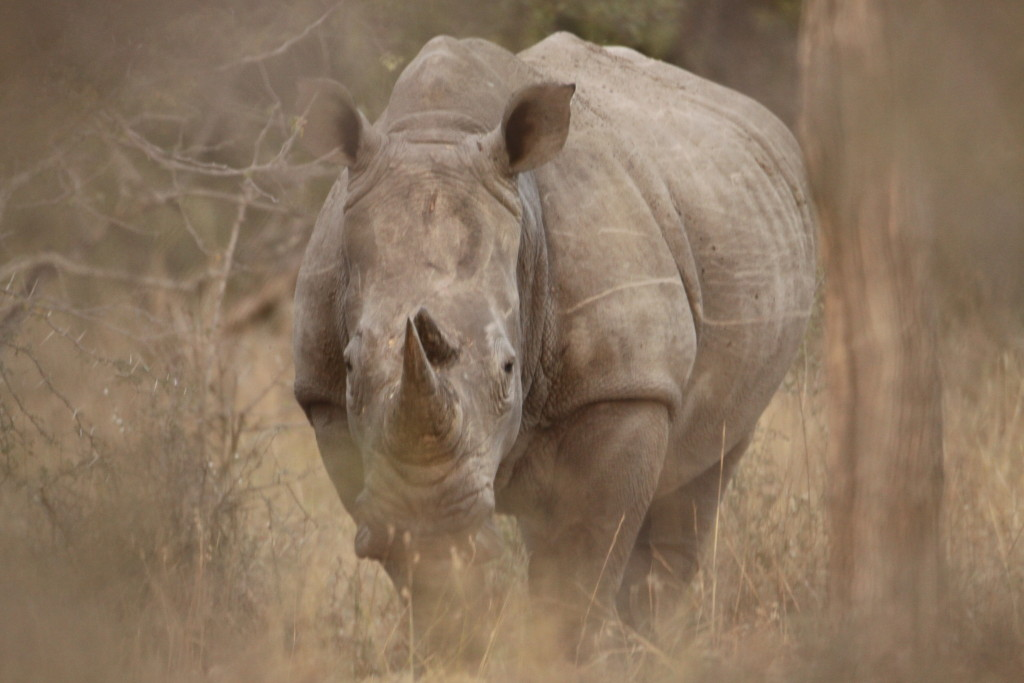 The fight against rhino poaching is taken to the next level with Drones