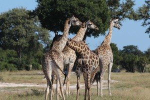 Hwange National Park 1