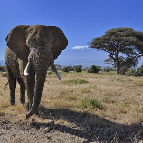 Amboseli National Park 6