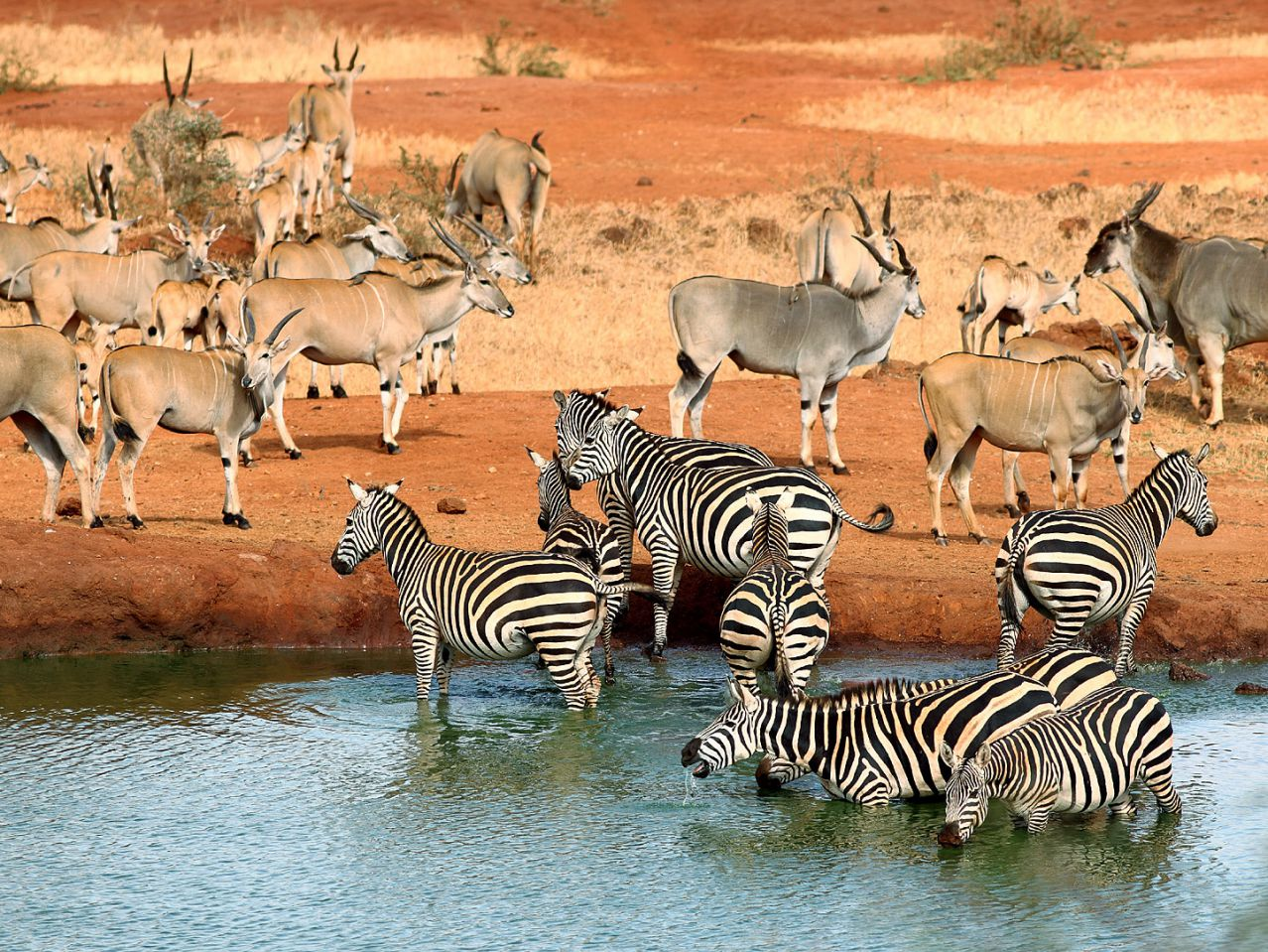 Tsavo National Park Tours