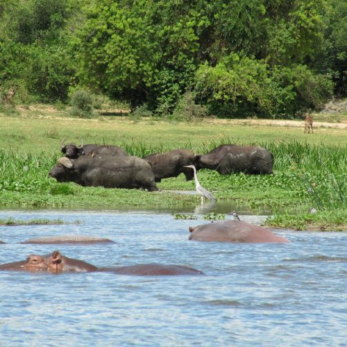 Murchison Falls National Park 4