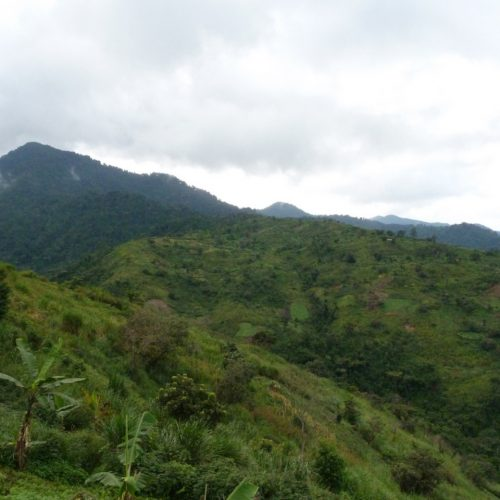 Rwenzori Mountains National Park 2