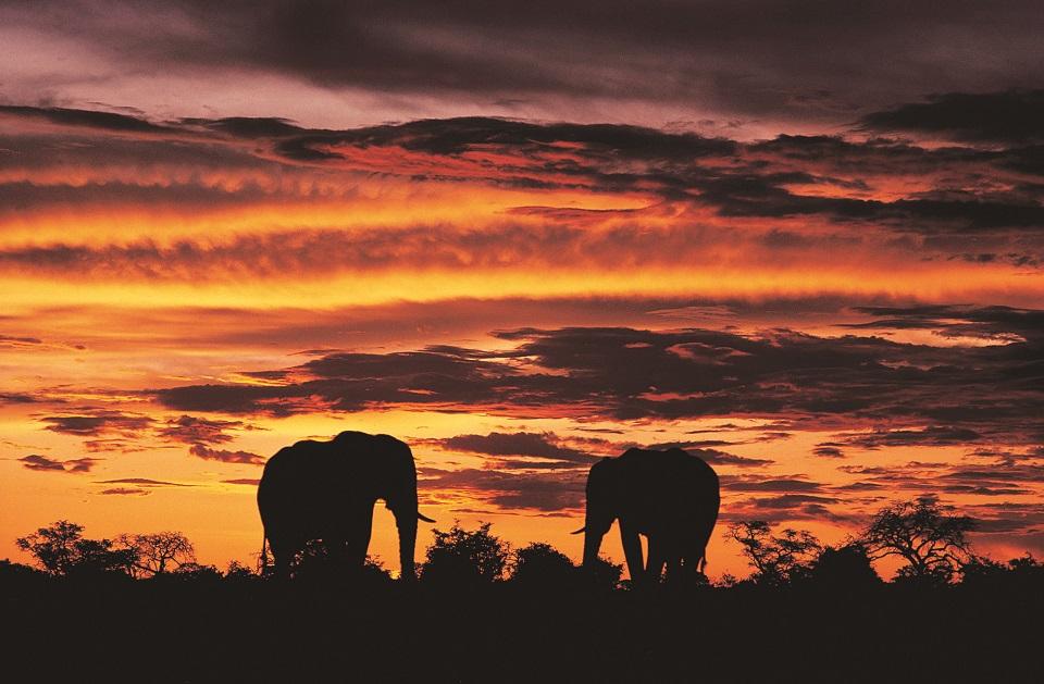 Elephant Siloette