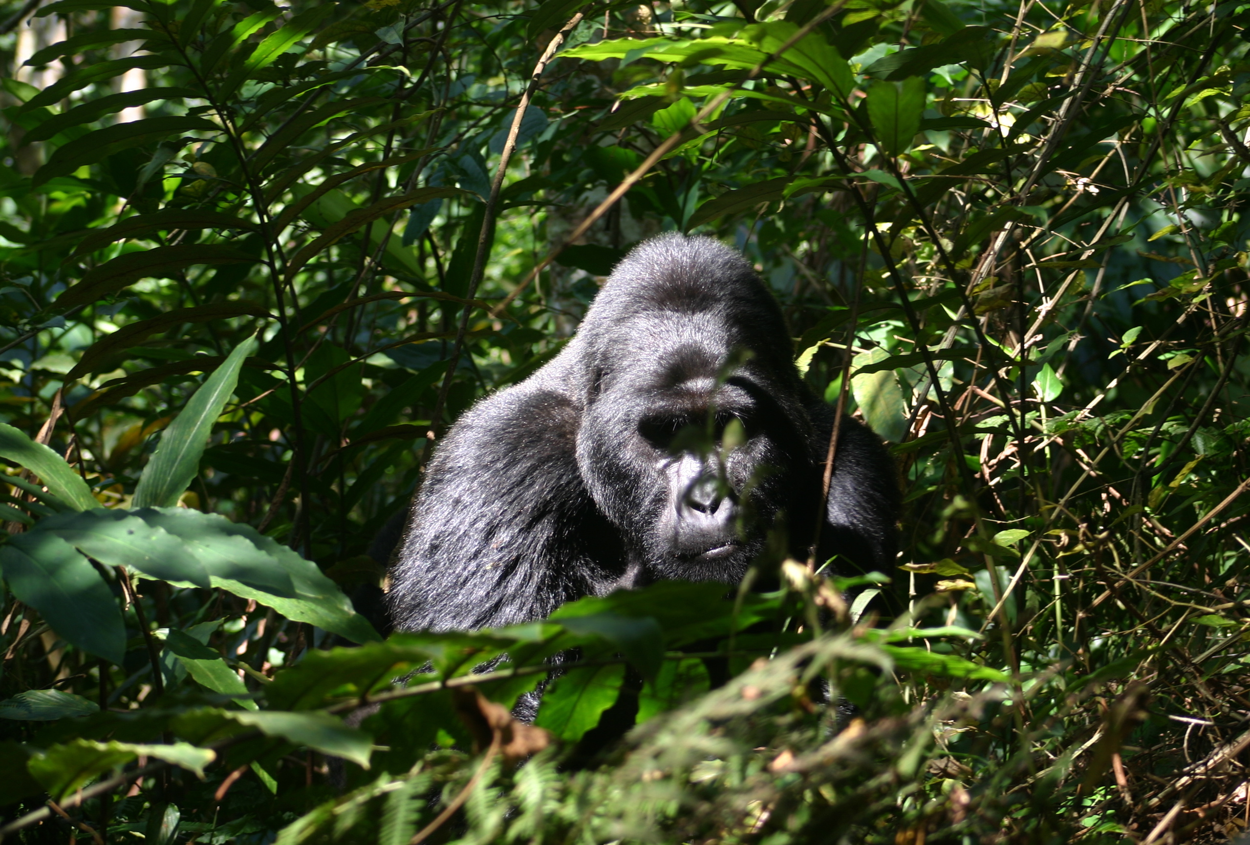 Bwindi Impeneltrable National Park