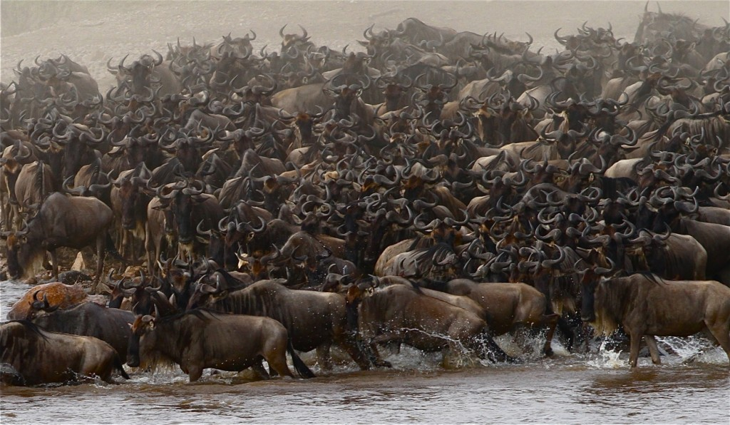 Predicting The Annual Wildebeest Migration