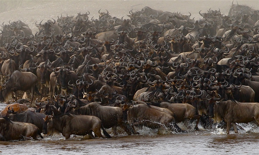 Herds Crossing the Grumet River