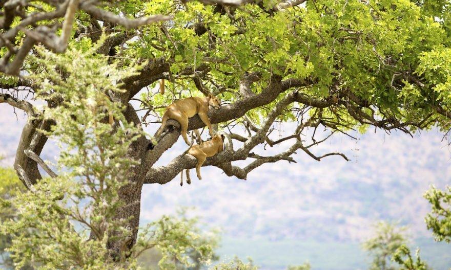 Tanzania Wildlife and Culture