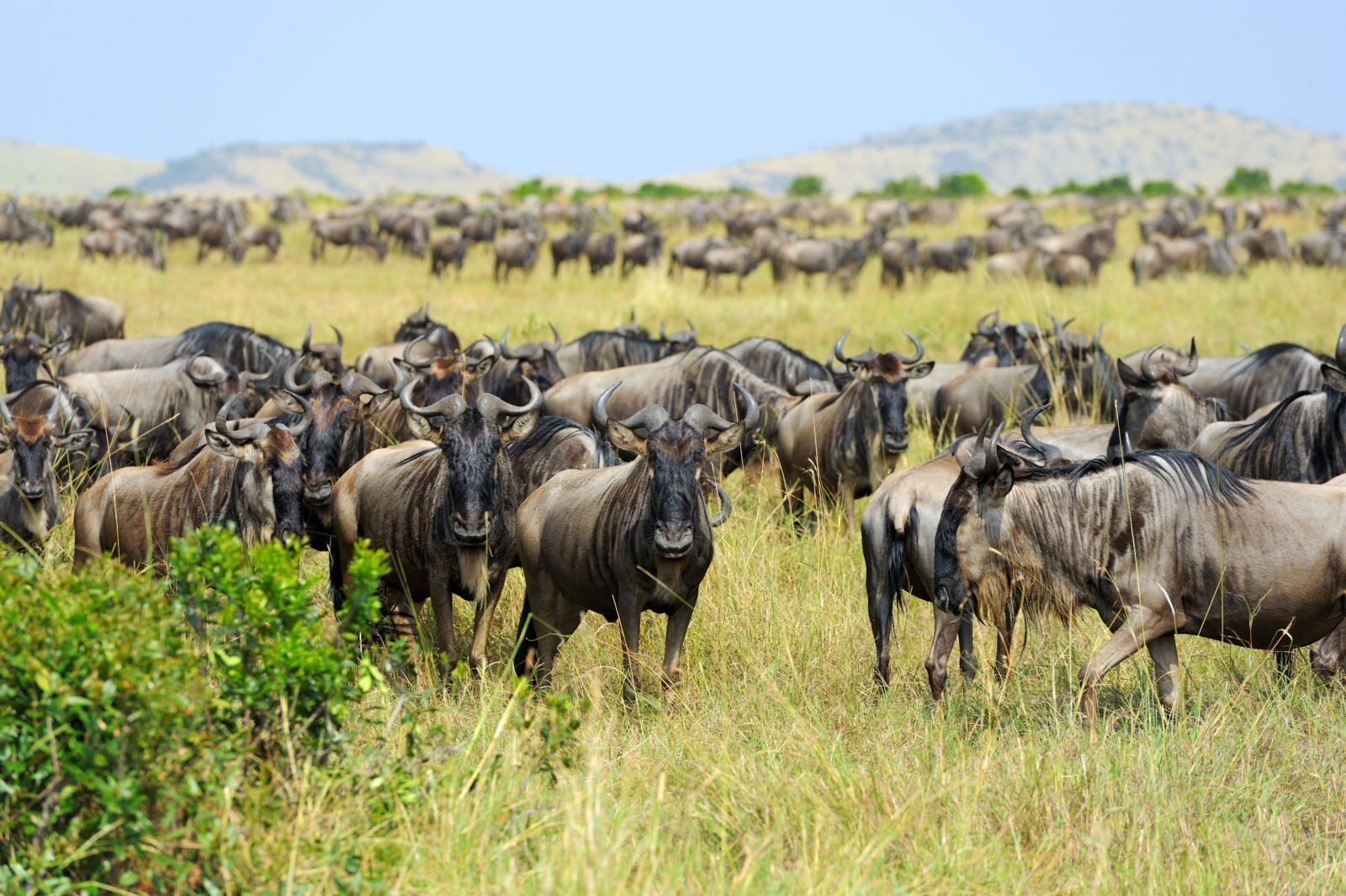 Discover The Highlights Of The Great Wildebeest Migration