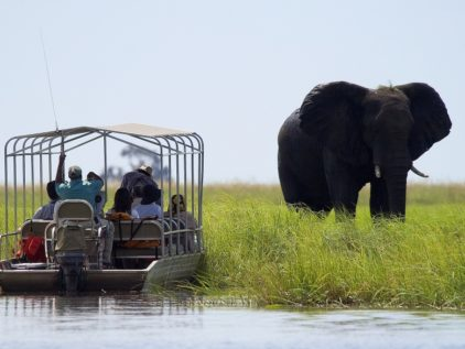 Guests Spotting an Elephent on a Chobe River Cruise