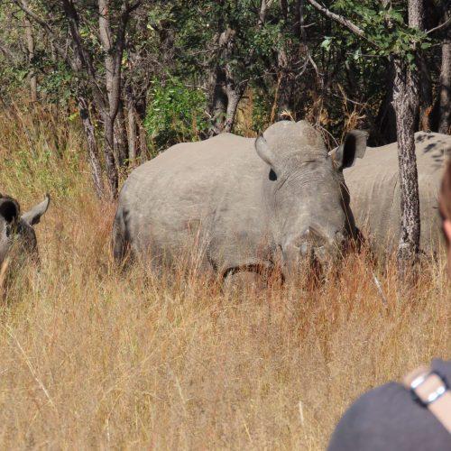 Rhino Tracking Matobo Hills