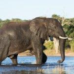 Botswana Wildlife Breakaway 1