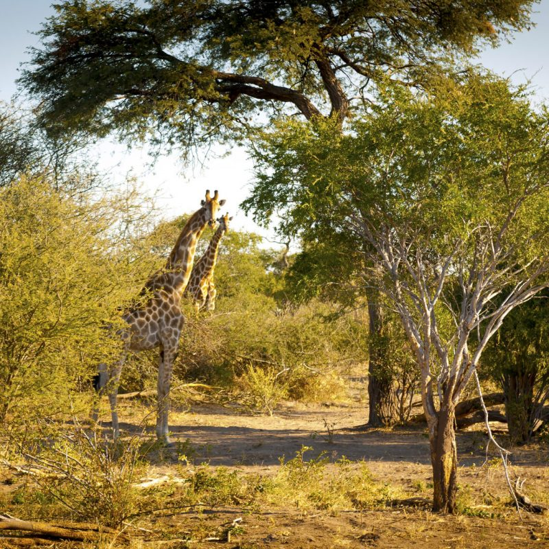 Botswana Lodge Explorer 1