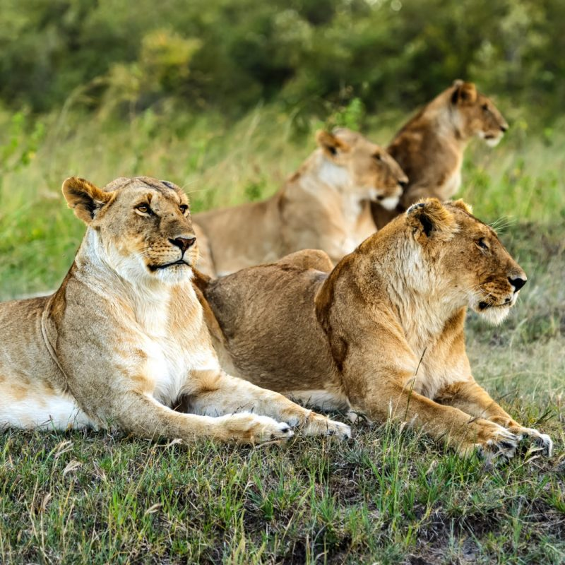Botswana Untouched Lodge Safari - 13 days 2