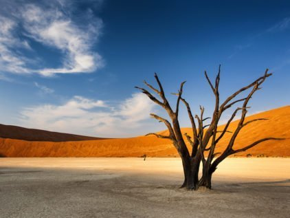Dead tree in Sossusvlei in the Namib Desert Namibia