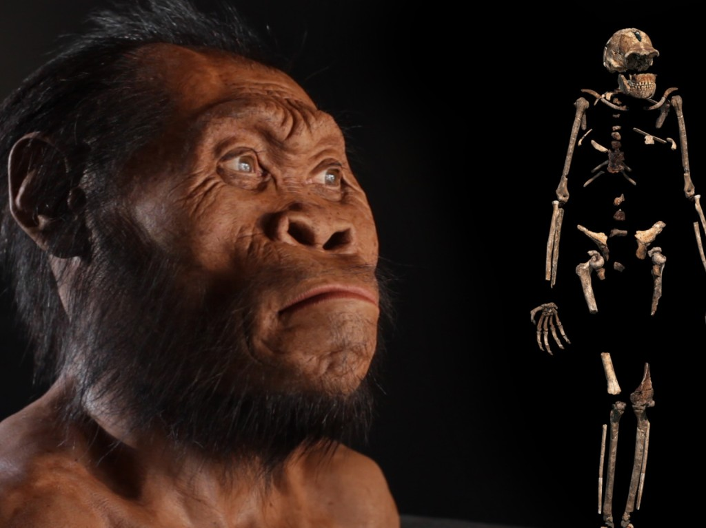 The Discovery of Homo Naledi