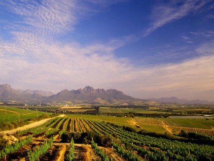 Winelands Wine 4