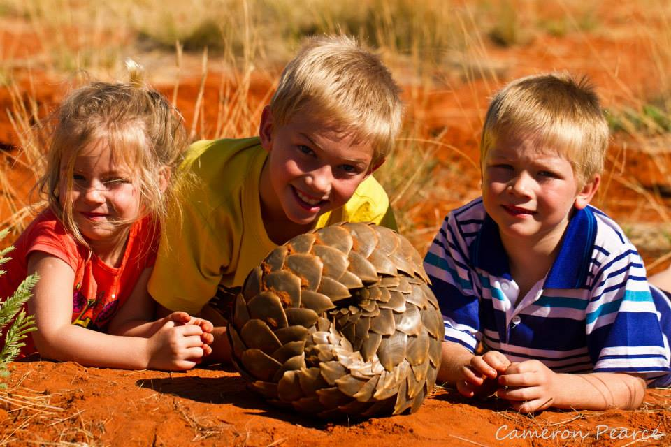 Discovering the rare pangolin at the Twsalu Kalahari Reserve which is ideal for small children