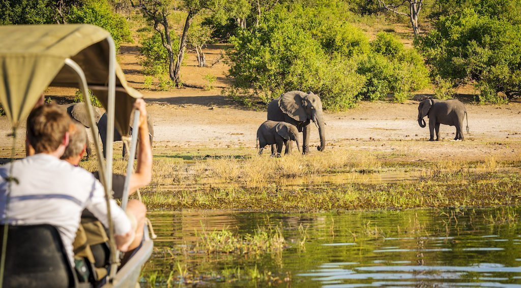 Top 10 Safaris