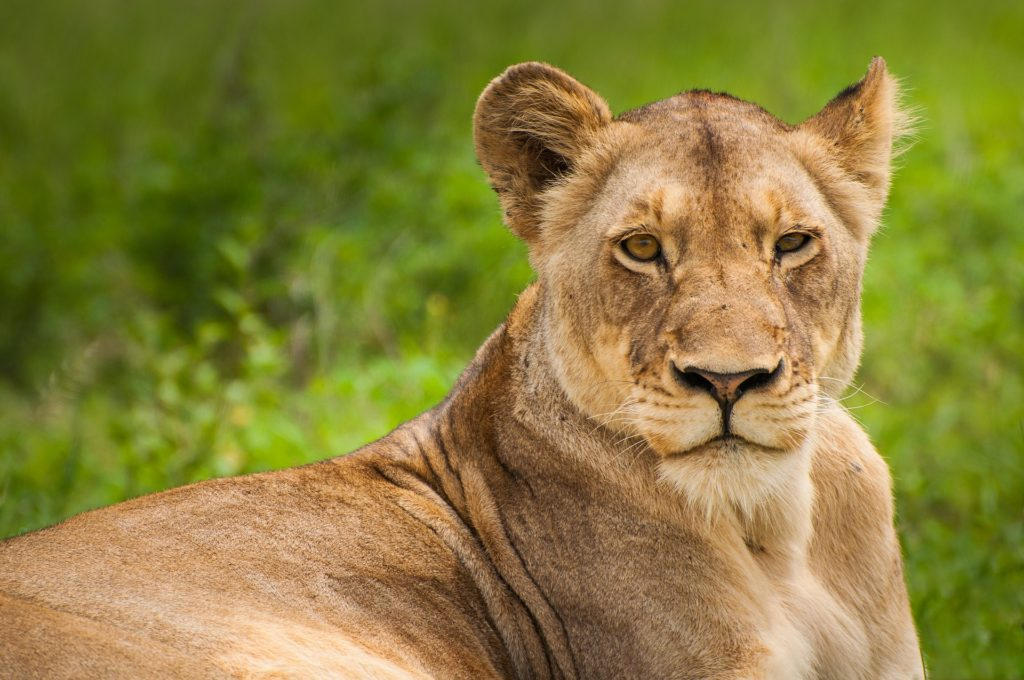 Donation Update: Jenman African Safaris raises $ 1590 for the CWF 4