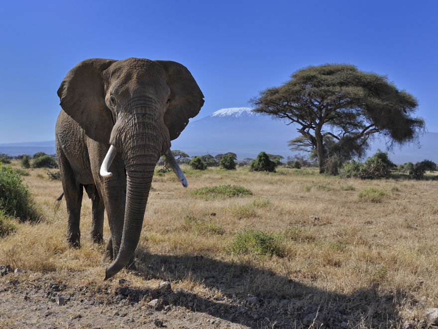 East Africa Travel Diaries: Kilimanjaro, Tanzania Safari and Rwanda's Gorillas