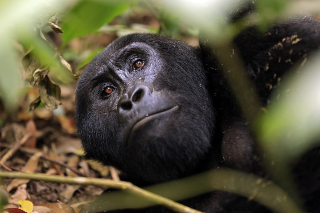 5 Tips for a Gorilla Trek