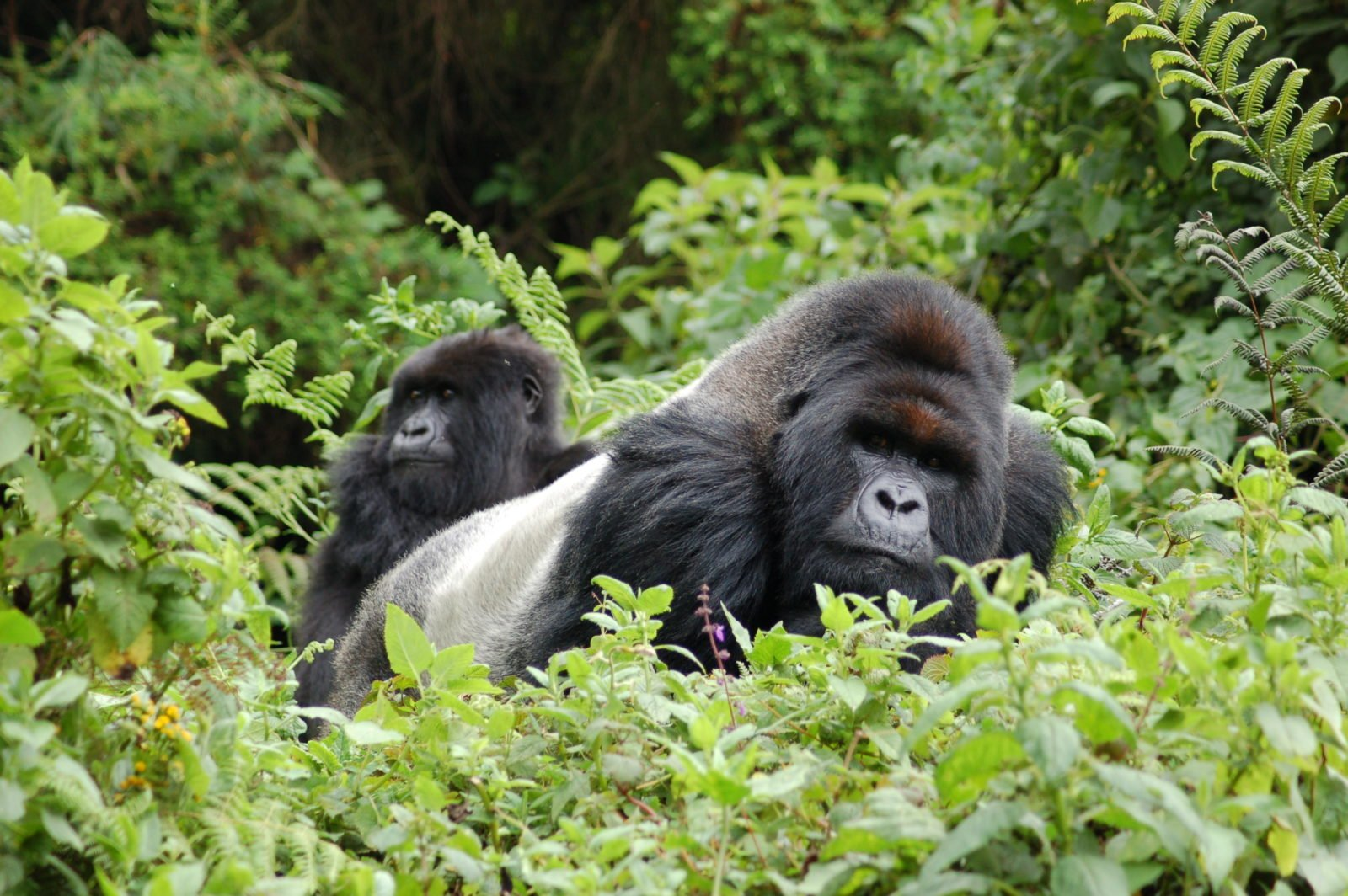 The Responsible Tourism Partnership Working on a Sustainable Solution in Bwindi, Uganda 1