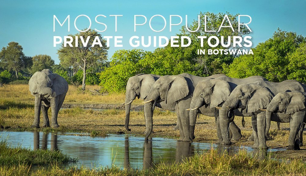 Botswana Private Tour