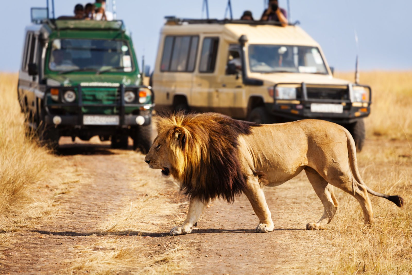 How Guided Group tours hit that safari sweet spot 1