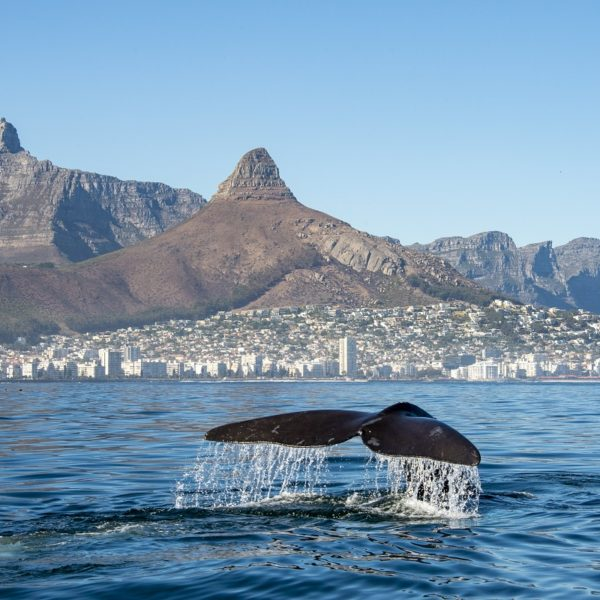 Marine Eco Tour | Cape Town
