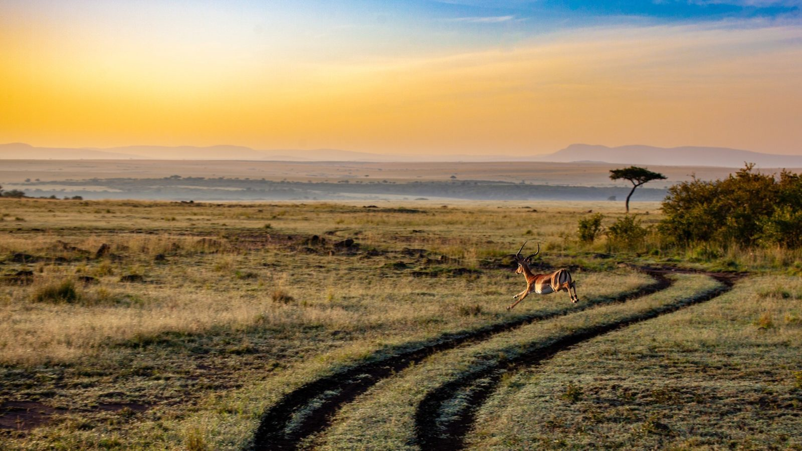 Pride Rock | Antelope in Kenya