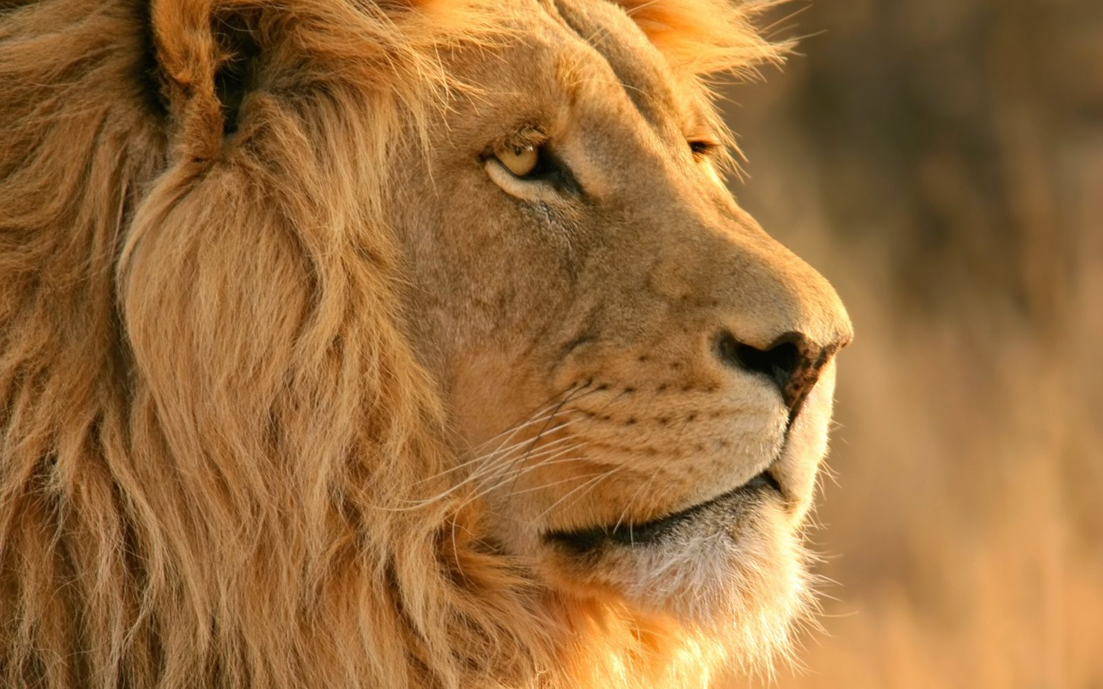 Is the Lion Really King of the Jungle?