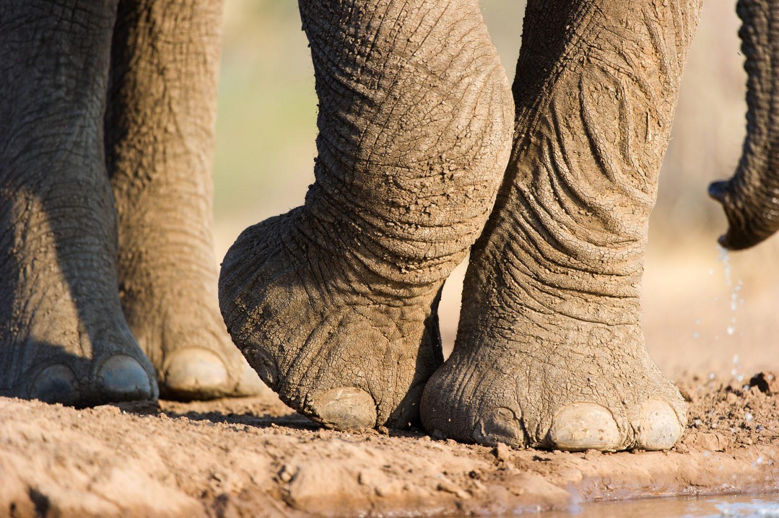 Elephant Graveyard Blog
