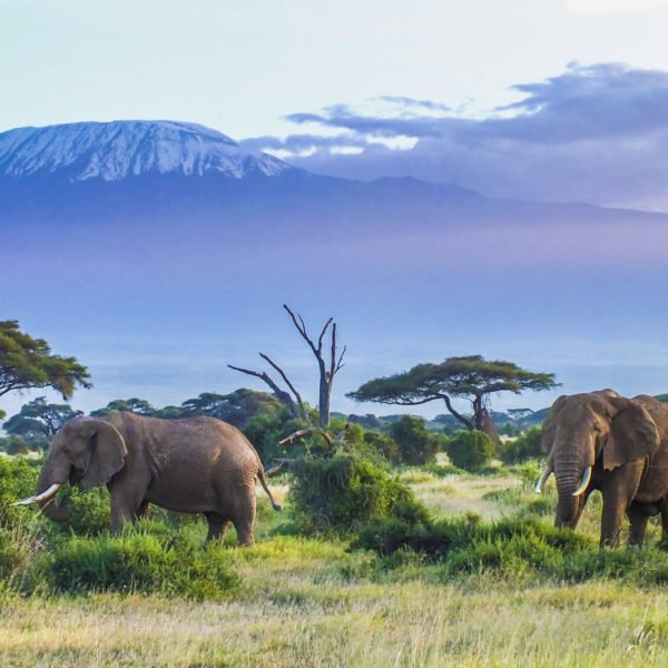 Elephant | Kilimanjaro, Tanzania