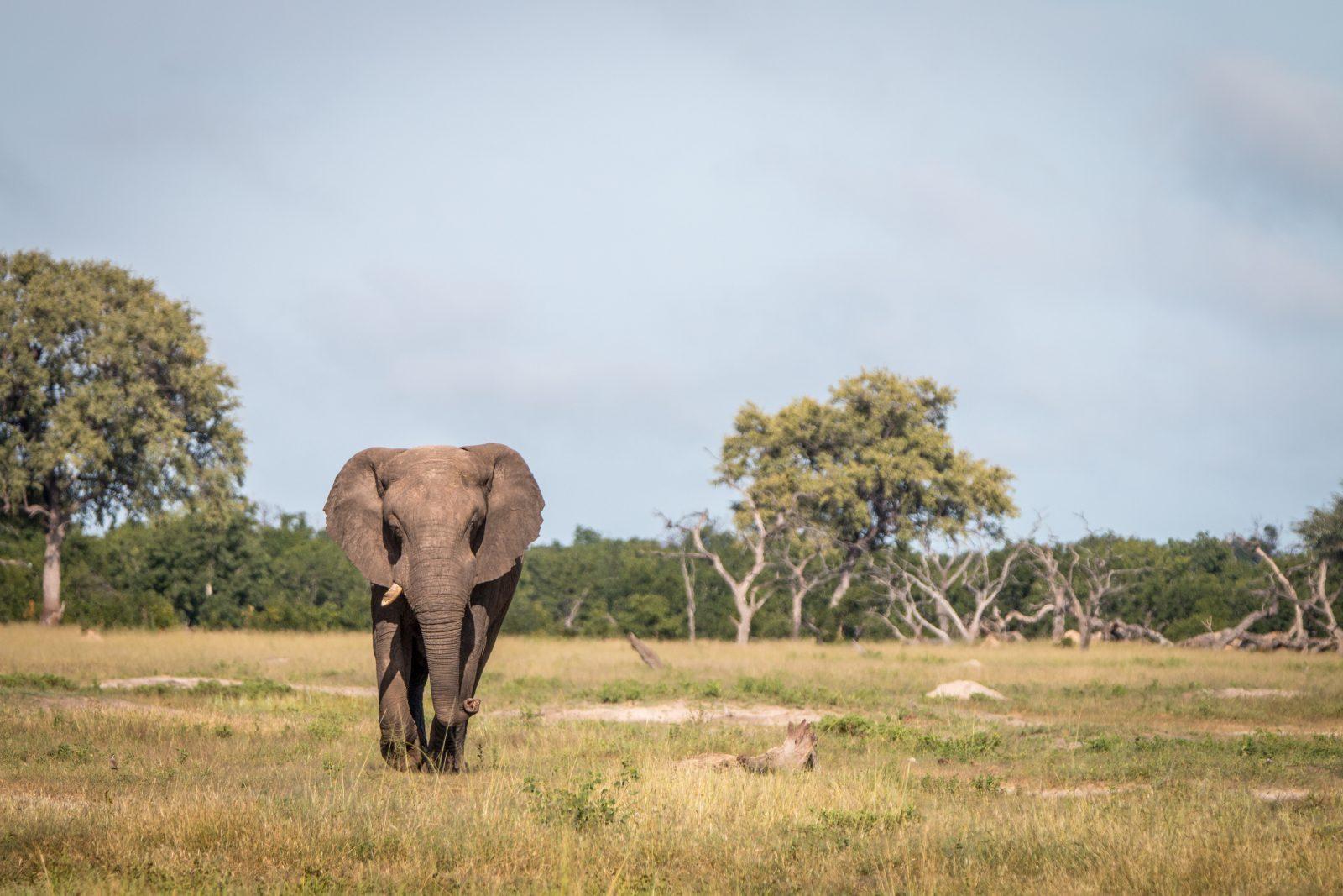 Elephant, Hwange National Park