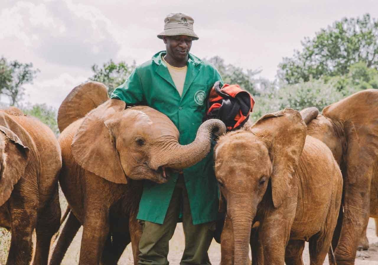 Conservation - Daphne Sheldrick Elephant Trust