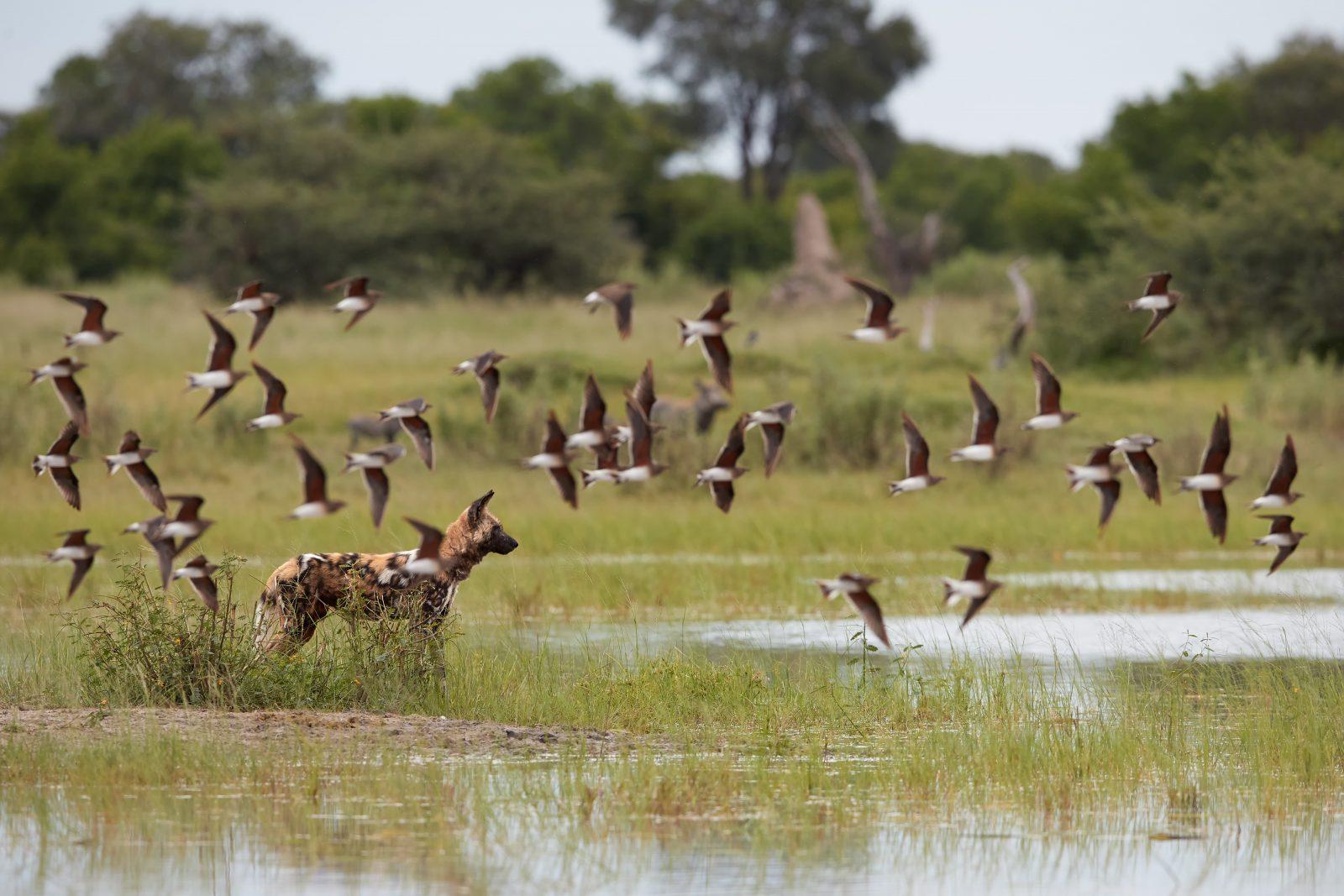 Green Season - Botswana and Zimbabwe