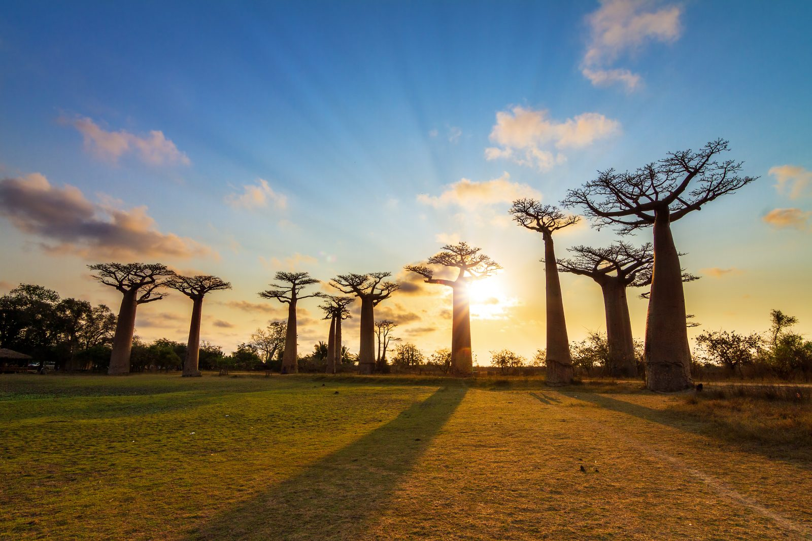 Avenue of Baobabs 2