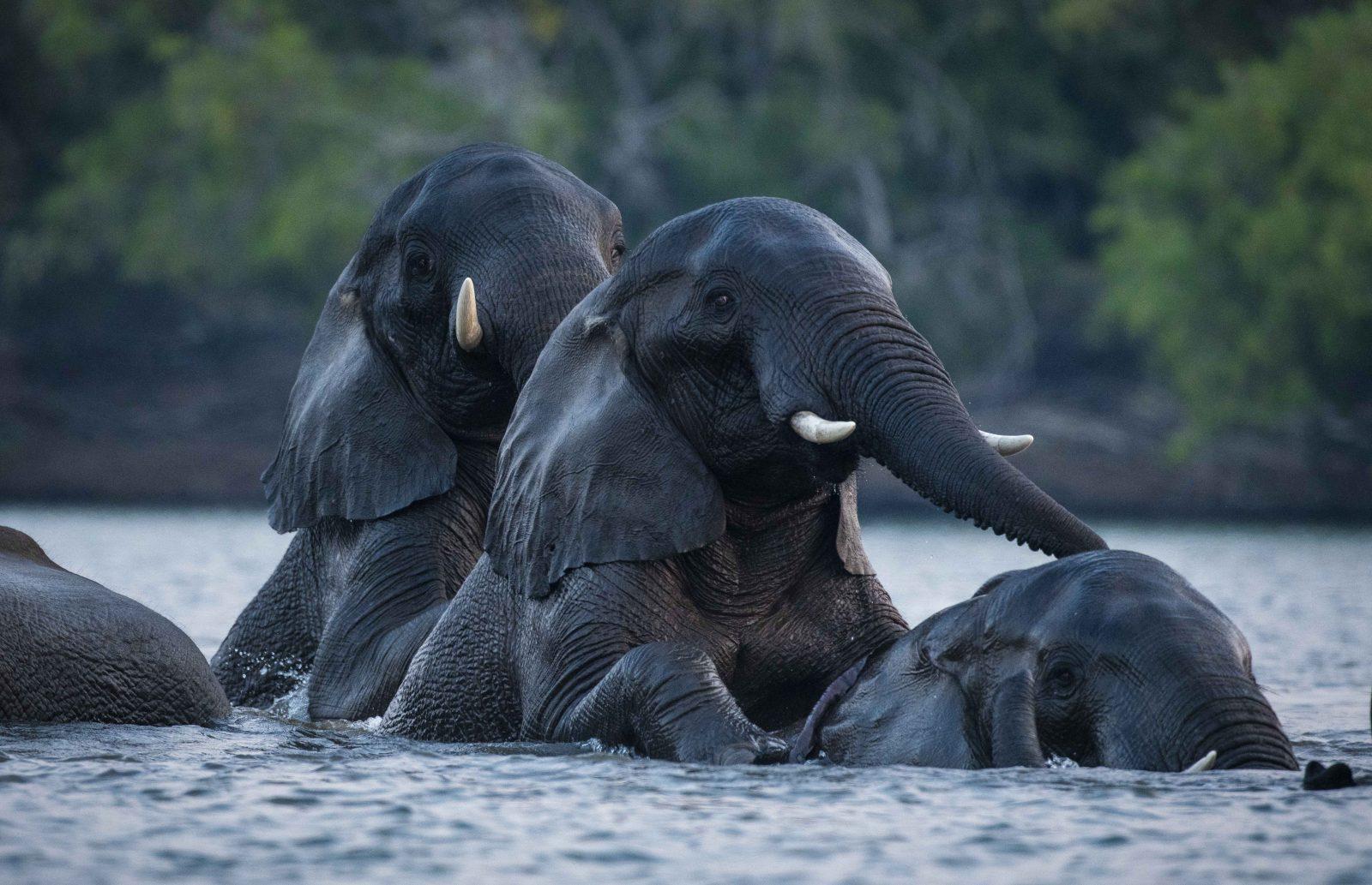 Wildlife Photography Tommy Varley
