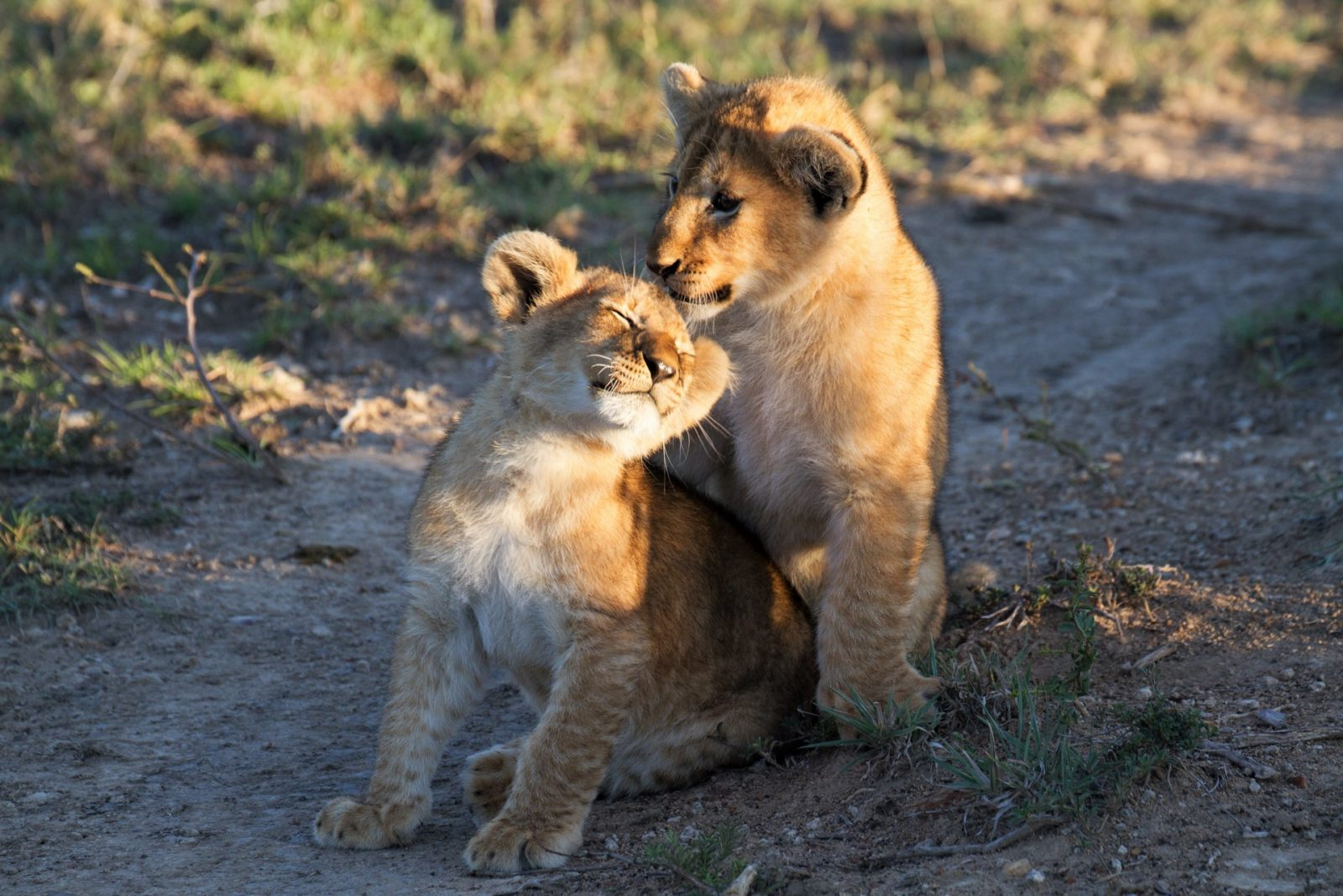 Wildlife Photography - Kenya