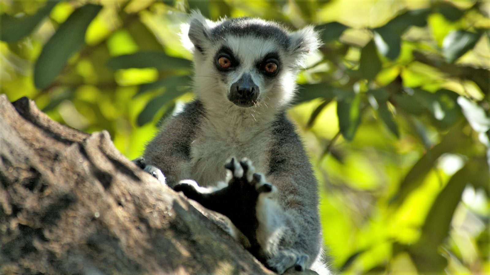 Wildlife Photographer - Lemurs in Madagascar