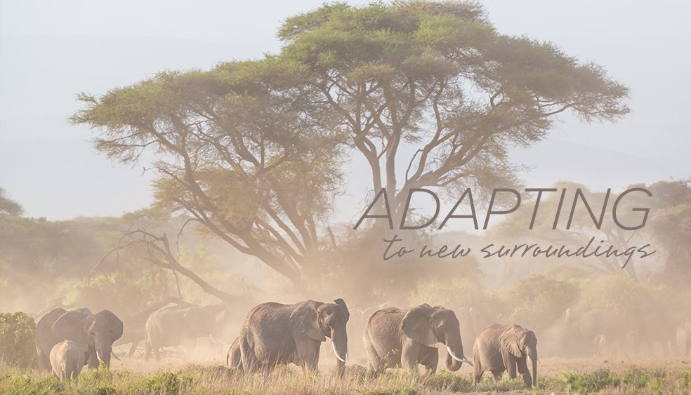 Adapting to the new Guided Groups Safaris Travel Environment