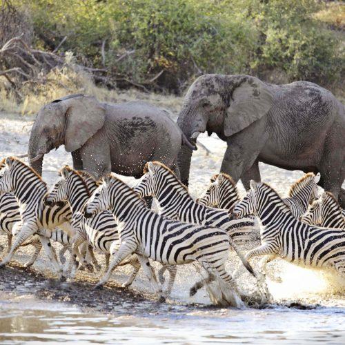 Botswana Sensations