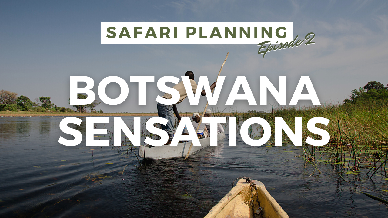 Safari Planning YouTube Thumbnail- Botswana Sensations