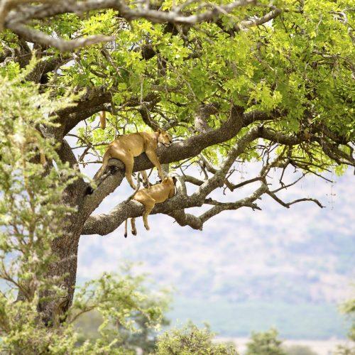 Unrivalled Tanzania