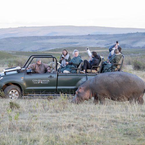 Garden Route Safari & Whale Luxury Combo