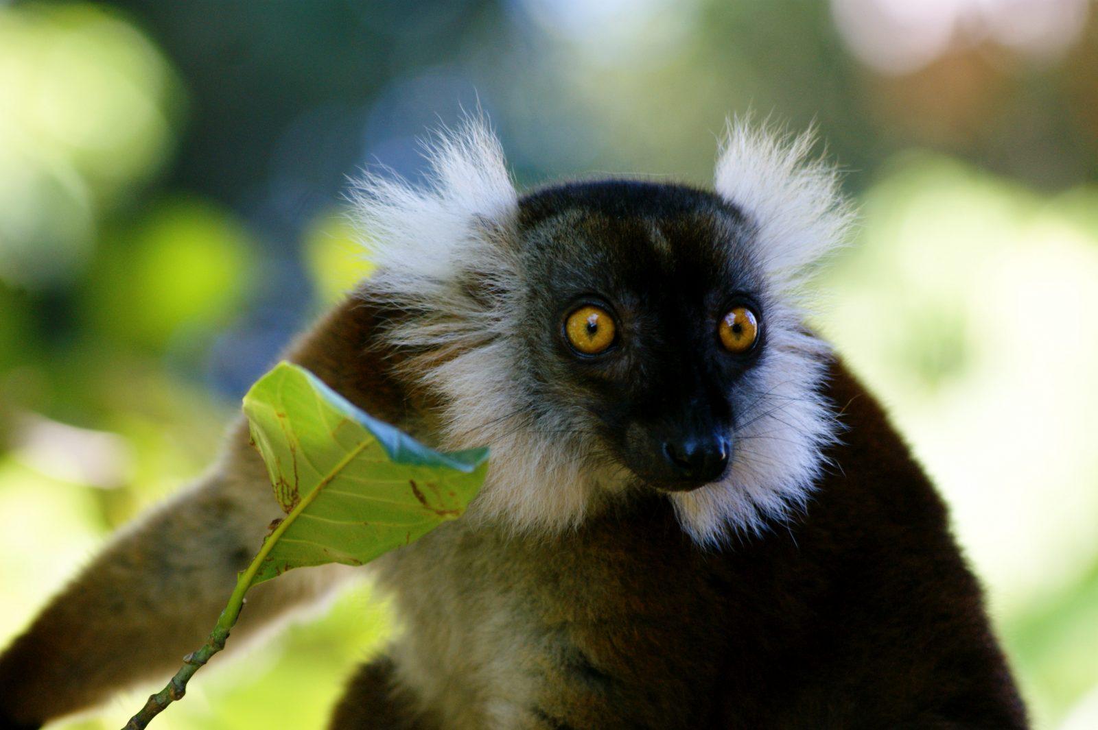 Travelling Down Memory Lane to Madagascar 10